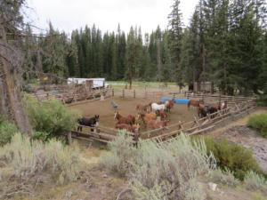 Trailhead corral
